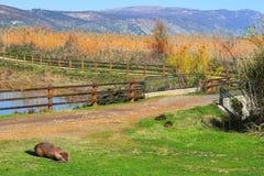 Hula Lake nature reserve, Hula Valley, Israel Royalty Free Stock Images