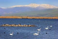 Hula Lake nature reserve, Hula Valley, Israel Stock Images