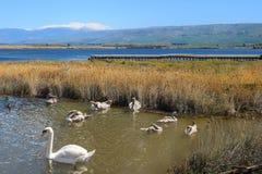 Hula Lake nature reserve, Hula Valley, Israel Royalty Free Stock Photography