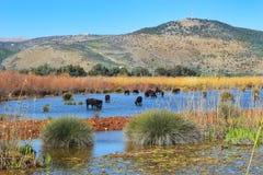 Hula Lake nature reserve, Hula Valley, Israel Royalty Free Stock Image