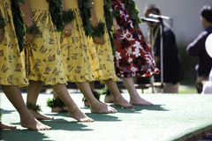 hula rząd tancerkę. Fotografia Royalty Free