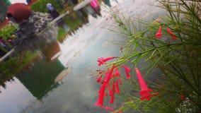 Hulhumale centrali park Zdjęcie Stock