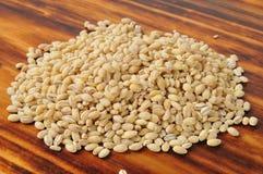 Hulled barley Stock Images