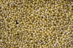 Hulled millet background. Macro shot of hulled millet seeds Royalty Free Stock Image