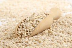 Hulled pearl barley and a wooden shovel Stock Photos