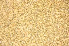 Hulled Pearl Millet Grain. Close-up of hulled pearl millet grain. Shot with Canon 20D royalty free stock photography