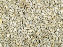 Hulled sunflower seeds. A layer of sunflower seeds as a background or texture Royalty Free Stock Images