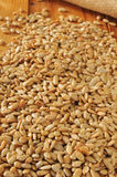 Hulled sunflower seeds. A mound of hulled, roasted and salted organic sunflower seeds Stock Photo