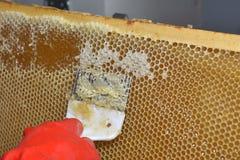 Hulpmiddel om honingraten te openen Stock Afbeelding