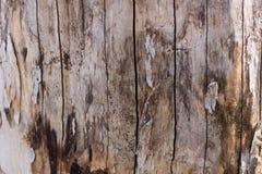 Hulptextuur van de bruine schors van een boom met groen mos op het Horizontale foto van een textuur van de boomschors Hulp creati royalty-vrije stock afbeelding