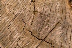 Hulptextuur van een oude eiken boom als achtergrond Harmonische kleurencombinaties royalty-vrije stock foto's