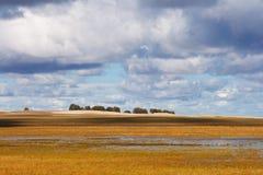 Hulun Buir grassland Royalty Free Stock Image