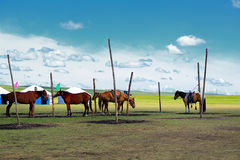 Hulun Buir grassland of Inner Mongolia Horse and scenery on Royalty Free Stock Photo