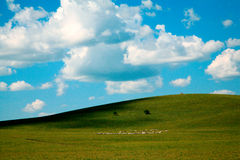 Hulun Buir Weideland Stockbild