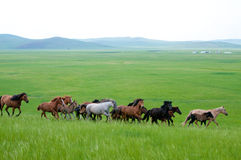 Hulunbeir landscape. July 2009,Hulunbeir landscape in China's Inner Mongolia Grassland Royalty Free Stock Photo
