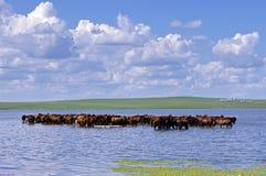 Hulunbuir betar land Fotografering för Bildbyråer