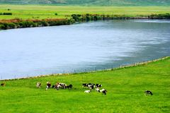 Landscape of Hulunbuir Grasslands stock images