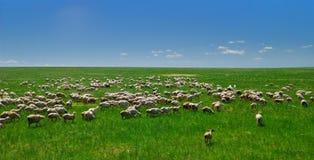 Hulunbuir prairie Stock Image