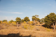 The hulunbuir prairie autumn in China. Hailar national forest park Royalty Free Stock Images