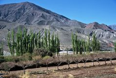 Humahuaca Valley,Salta,Argentina. Trees in Humahuaca valley ,Salta,Argentina Stock Image