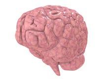 Humain brain Royalty Free Stock Photography