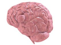 Humain brain Stock Photography