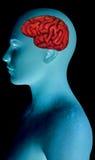 Humain Brain Body Part, pensée Images libres de droits