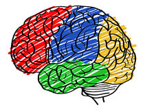 Humain Brain Vector Outline Sketched Up Images stock