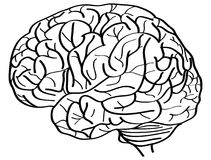 Humain Brain Vector Outline Sketched Up Photographie stock