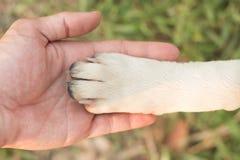 Humain et chien Images libres de droits