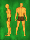 Human Acupuncture Model royalty free illustration