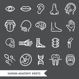 Human anatomy body parts detailed icons set. Stock Image