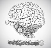 Human anatomy brain with vintage mechanism in steampunk style Stock Image