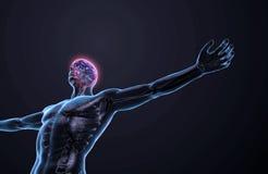 Human anatomy - central nervous system. Human anatomy illustration - central nervous system with a visible brain vector illustration
