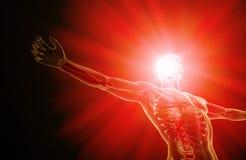 Human anatomy - central nervous system. Human anatomy illustration - central nervous system with a visible brain stock illustration