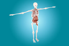 Human anatomy Royalty Free Stock Photos