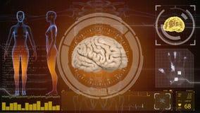 Human anatomy. Human brain. HUD background. Medical concept anatomical future.  royalty free illustration
