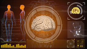 Human anatomy. Human brain. HUD background. Medical concept anatomical future Royalty Free Stock Photos