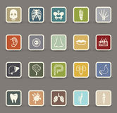 Human anatomy icons Royalty Free Stock Photos