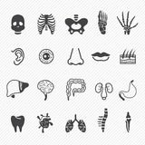 Human anatomy icons Stock Photography