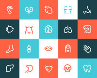 Human anatomy icons. Flat style Stock Images