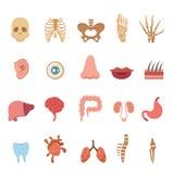 Human anatomy icons Stock Photo