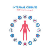 Human anatomy icons. Vector internal organs pictogram set. Royalty Free Stock Image