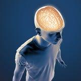 Human anatomy illustration Royalty Free Stock Photography