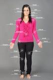 Human anatomy model Stock Images