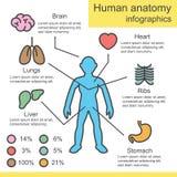 Human anatomy outline infographics Royalty Free Stock Photography