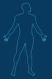 Human anatomy x-ray style Stock Photo