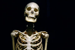 Human Anatomy real skeleton. On a black background royalty free stock photos