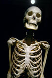Human Anatomy real skeleton. On a black background stock image