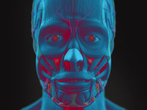 Human anatomy science fiction art view of face. Royalty Free Stock Image